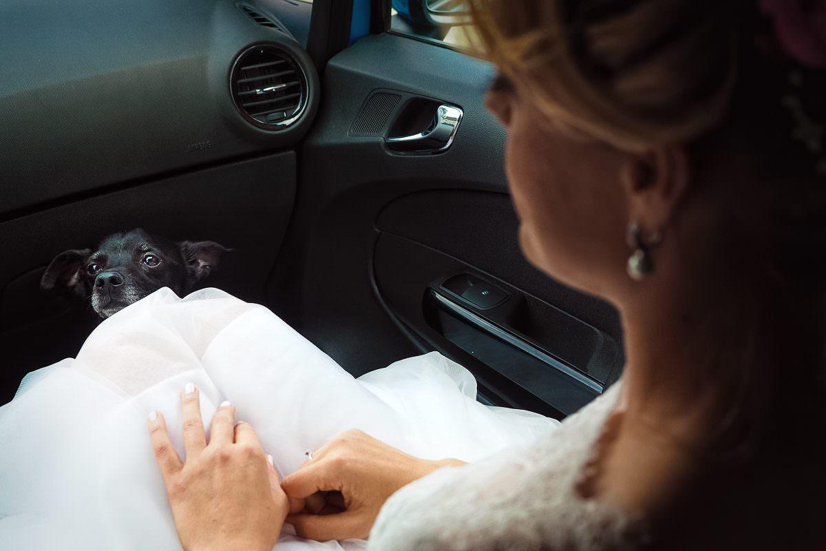 Hochzeit mit Hund und Hochzeitsfotograf